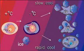 Μηχανισμός δράσης κρυοθεραπείας